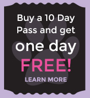 Buy a 10 Day Pass and get 1 Day Free!