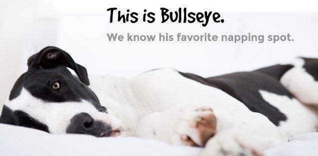 This is Bullseye