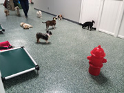 Doggie Day Camp