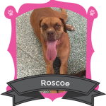 Our March Camper of the Month is Roscoe