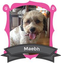 Maebh