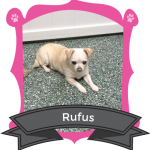 Our August Camper of the Month Rufus