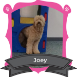 Our September Camper of the Month is Joey