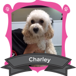 Our October Camper of the Month is Charley