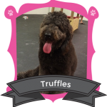 Our November Camper of the Month is Truffles