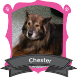 Our January Camper of the Month is Chester