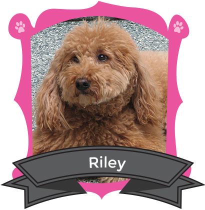Our June Camper of the Month is Riley