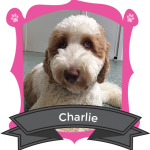 Our June Camper of the Month is Charlie