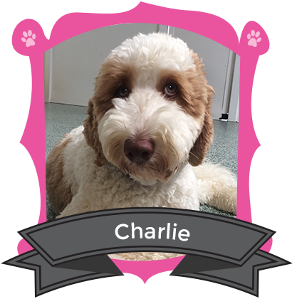 Our July Camper of the Month is Charlie