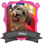 Our August Camper of the Month is Riley