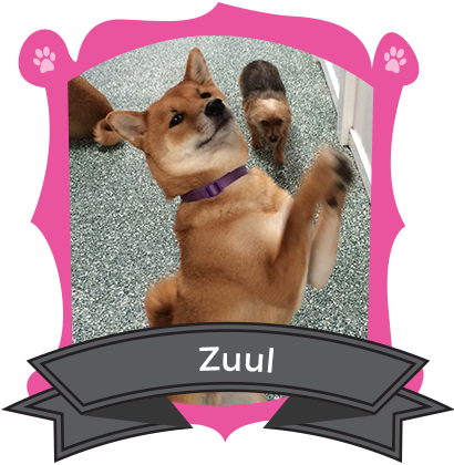 December Camper of the Month is Zuul