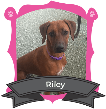 January Camper of the Month is Riley