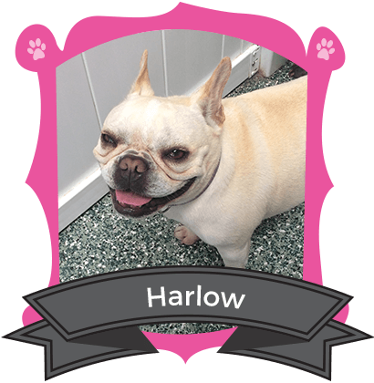 February Camper of the Month is Harlow