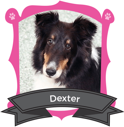 March Camper of the Month is Dexter