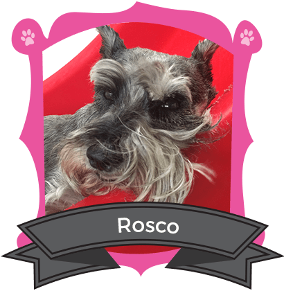 August Camper of the Month is Rosco