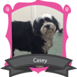 December Camper of the Month is Casey