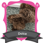 June Camper of the Month is Dolce
