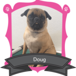 "August Camper of the Month is Doug ""The Wonder"" Pug"