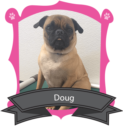 August Camper of the Month is Doug The Wonder Pug