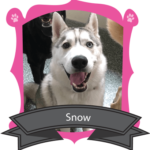 September Camper of the Month is Snow