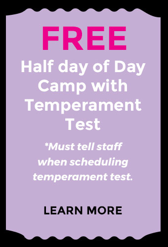 Free Half Day of Day Care with Temperament Test