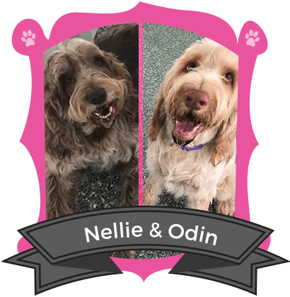 November Campers of the Month are Nellie & Odin