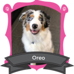 February Camper of the Month is Oreo