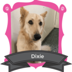 May Camper of the Month is Dixie