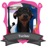 June Camper of the Month is Tucker