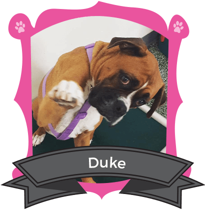 Our Big Dog August Camper of the Month is Duke