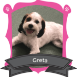 Small Dog July/August Camper of the Month is Greta