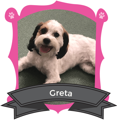 Our Small Dog August Camper of the Month is Gret