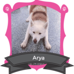 Big Dog September Camper of the Month is Arya