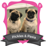 Small Dog September Campers of the Month are Pickles & Pasia