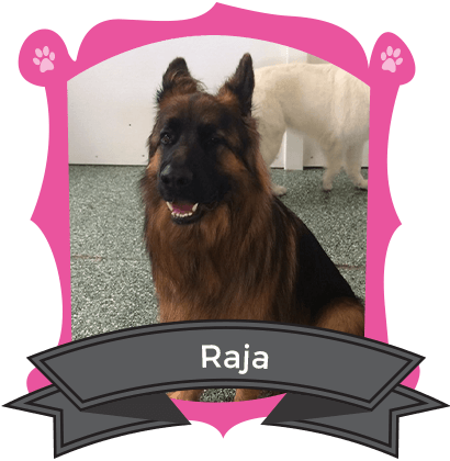 Our Big Dog October Camper of the Month is Raja