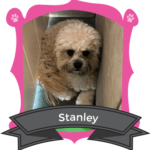 Small Dog October Camper of the Month is Stanley