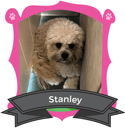 Our Small Dog October Camper of the Month is Stanley