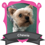 Small Dog December Camper of the Month is Chewie