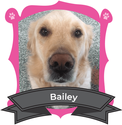 Big Dog February Camper of the Month is Bailey