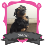 Small Dog February Camper of the Month is Jaspyr