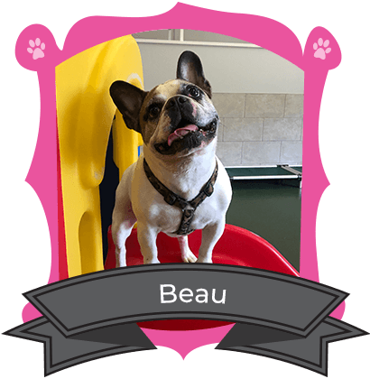 Small Dog March Camper of the Month is Beau