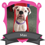 Big Dog March Camper of the Month is Max