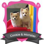 Small Dog May Campers of the Month are Cookie & Monster