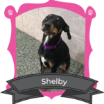 Big Dog May Camper of the Month is Shelby