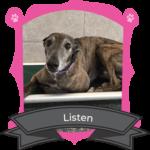 Big Dog June Camper of the Month is Listen