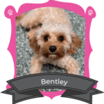 August Camper of the Month is Bentley