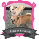 October Campers of The Month are Fender & Nacho