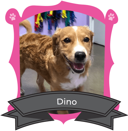 December Camper of The Month Is Dino