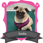 February Camper of The Month Is Sadie