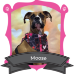 March Camper of The Month Is Moose